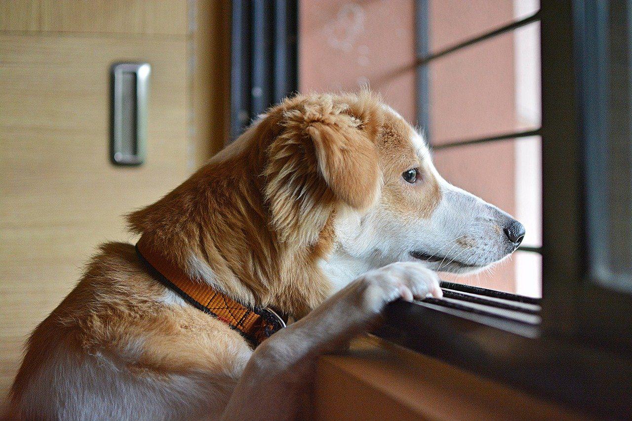 il cane è il miglior amico dell'uomo